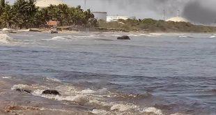 IAMPROAM no tiene competencia en los casos de contaminación generados por PDVSA en El Palito