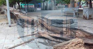 Aun restos de árbol caído